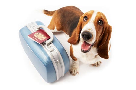 mascotas pasaporte reino unido londres avion perro gato documentos