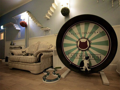cat-cafe-emporium-londres
