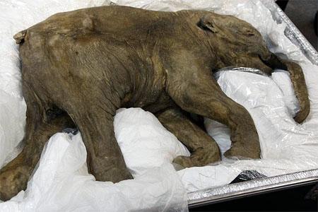 lyuba museo natural londres exposicion mamut